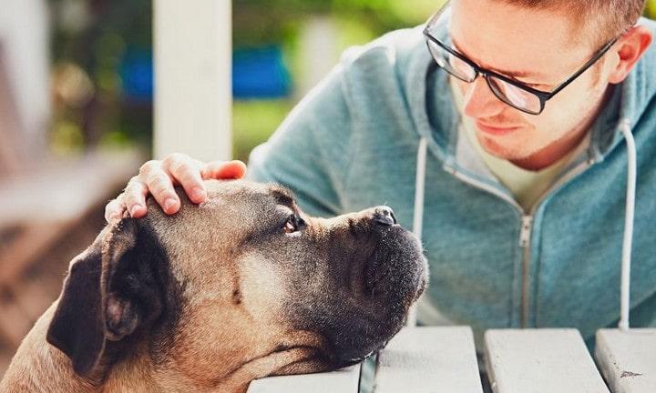 Faire face à la perte d'un animal de compagnie